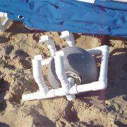 beach cabana13